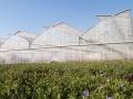 invernaderos-gotico-2