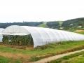 invernaderos-tunel-asthor-6