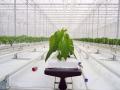 sistemas-cultivo-1