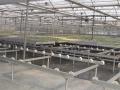 sistemas-cultivo-5