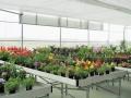 sistemas-cultivo-7