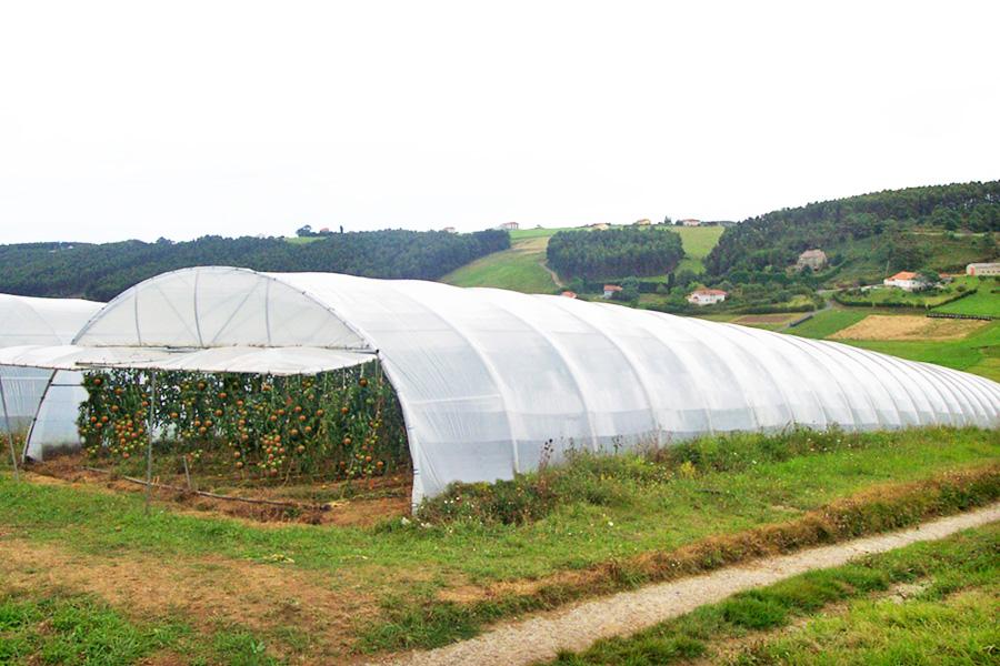 Invernadero t nel asthor asthor tunnel greenhouse Diseno de invernaderos pdf
