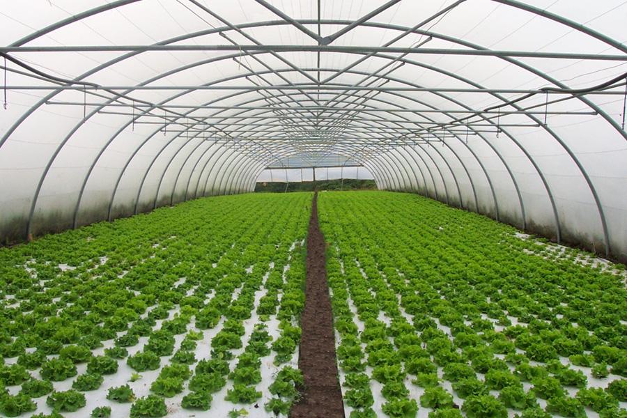 Invernaderos asthor fabricantes de invernaderos for Que es un vivero de plantas