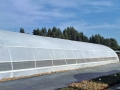 invernaderos-tunel-asthor-3