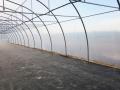 invernadero-tunel-gotico-3